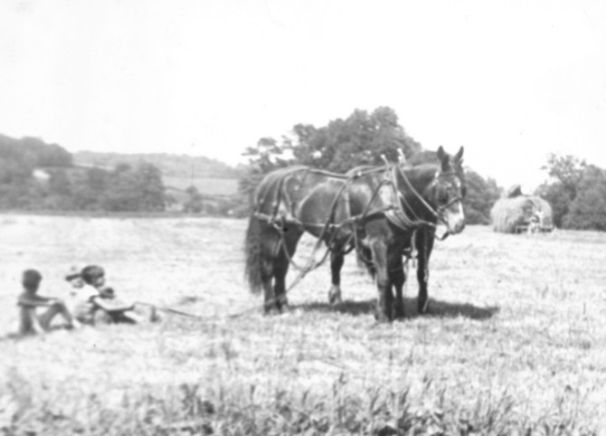 Farm_horse_in_field